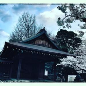 夜桜能170403(350変換後)